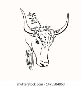 Vector sketch of yak head with big horns, Hand drawn linear illustration