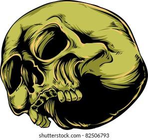 Vector skull illustration