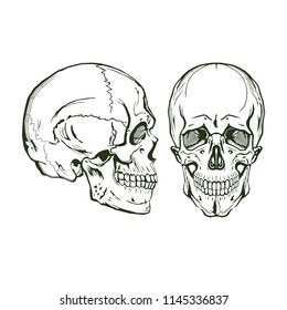 vector skull, monogram, graphic illustration, side and front view, clip art