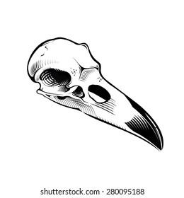vector skull ravens