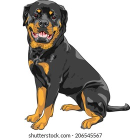 Vector smiling dog Rottweiler breed sitting isolated on the white background