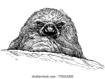 Vector smiling sloth portrait. Sloth closeup. Exotic south american animal isolated on white background