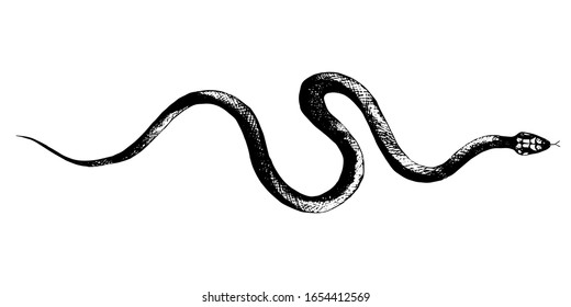 vector  snakes pencil drawing, vintage style graphic black and white, viper, python
