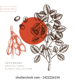 Vector Soya illustration. Agricultural plant with leaves, flowers, beans drawings. Hand drawn gluten free plants. Vegan food Lineart. Botanical floral design