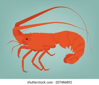 Vector spiny lobster or rock lobster on simple background
