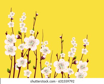 Vector Spring  apricot blossoming branch on bright background