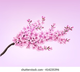 Vector spring sakura branch flower blossom floral design element