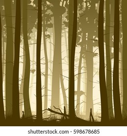 Vector square illustration inside misty coniferous forest with grass.