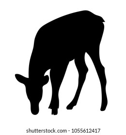 Vector standing doe silhouette deer drinking water or eating grass