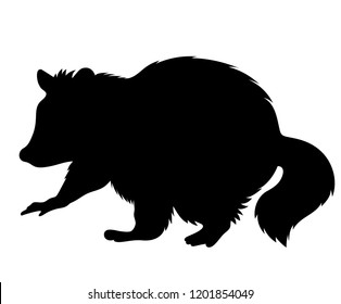 Vector standing young raccoon silhouette black isolated on white background wildlife illustration