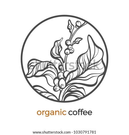 Vector Sticker Coffee Tree Branch Bean Stock Vector Royalty Free