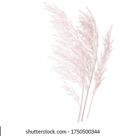 Vector stock illustration of pampas grass. Cream branch of dry grass. Panicle Cortaderia selloana South America, feather flower head plumesstep. Soft pink color. Template for a wedding card.