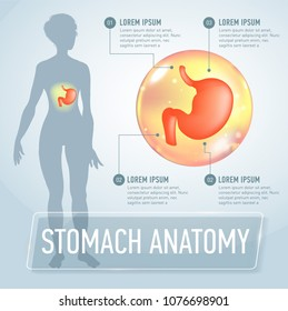 Vector stomach infographics banner illustration