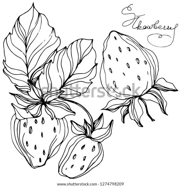 イチゴのベクター画像フルーツ 葉植物の植物園の花の葉 白黒の刻印インキアート イチゴのイラストエレメント のベクター画像素材 ロイヤリティフリー