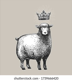 Vector Stylized Illustration of the Sheep with the crown over the head and surprised fasial expression. Vector illustration of the Queen Sheep in graphic style on the white background.