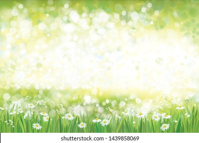 Vector summer, green nature  background, chamomiles field.