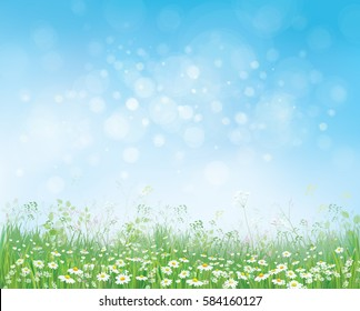 Vector summer nature  background,  blossoming flowers field on blue sky.
