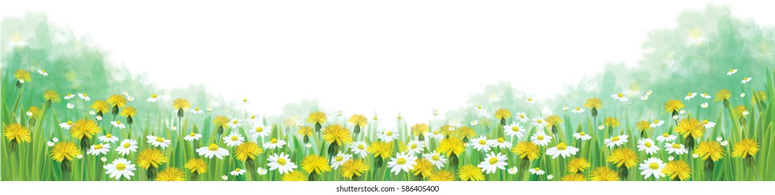 Vector summer nature  background, chamomiles and dandelions field.