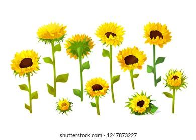 vector sunflower flower cute icons big set