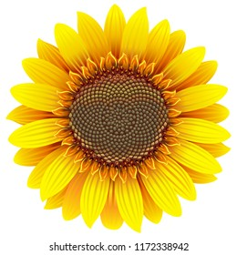 Vector Sunflower Icon isolated on white background