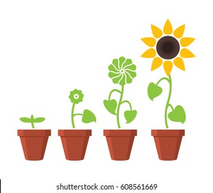 vector sunflower plant growth stages concept, abstract flower symbols isolated on white background, flat style