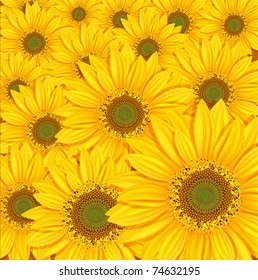 vector sunflowers background