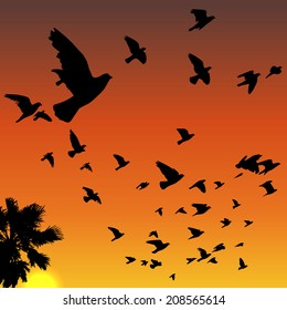 Vector sunset tropical birds silhouettes flying above the palm tree