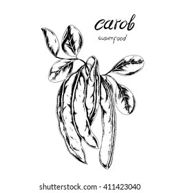 Vector super food Carob. Hand drawn branch of Carob with leaves and carob pods in sketch style.Super food for vegetarian.