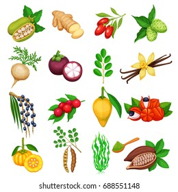 Vector superfood icons set. Healthy detox natural product of camu camu, garcinia cambogia and maca. Carob, ginger, moringa, lucuma, coji berries, mangosteen, acai, guarana and noni.