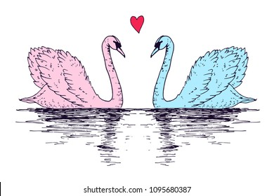 Vector swan couple illustration with reflection. Swimming elegant swan birds in love, beautiful wild nature sketch. Royal swan ink outline illustration, hand drawn animal.