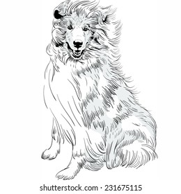 Vector Sweet dog rough Collie breed hand drawing vector