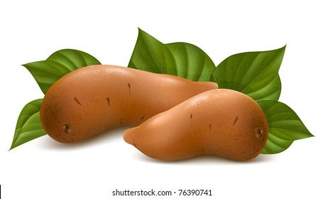 Vector. Sweet potato with leaves.