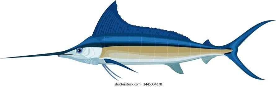 vector swordfish Atlantic blue marlin
