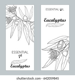 Vector templates with outline Eucalyptus globulus, fruit, flower and leaves isolated. Floral design for poster, banner, package with contour Eucalyptus branch for cosmetic, aromatherapy, medicine.