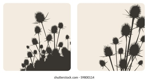 vector thistle illustration