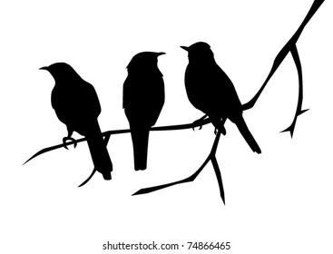 vector three birds on the branch
