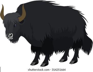 vector tibetan yak