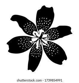 vector tiger lily flower isolated on white background
