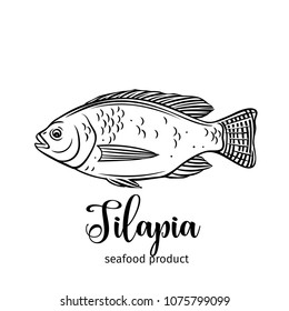 Vector tilapia. Hand drawn icon badge fish for design seafood packaging and market.