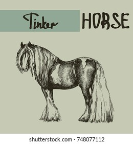 vector tinker draft horse