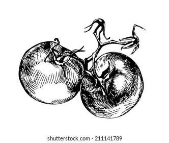 vector tomato. Black engraving