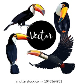Vector Toucan Bird Illustration Set