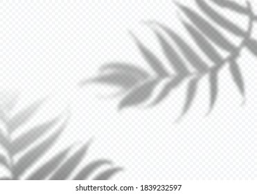 Vector Transparent Shadows of Leaves. Decorative Design Elements for Collages. Creative Overlay Effect for Mockups