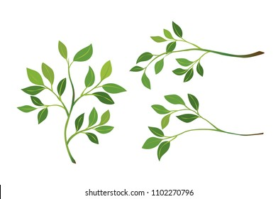 Vector of tree branch with green leaf