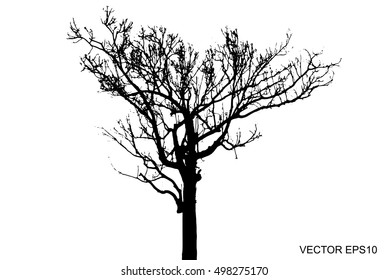 Vector of tree, Dry tree, dead tree with beautiful branch silhouette on white background.