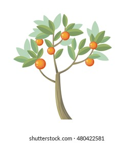 Vector tree. Orange isolated on white. Citrus trees belong to single genus Citrus and remain entirely interfertile. Includes grapefruits, lemons, limes. Part of series of different trees. Vector