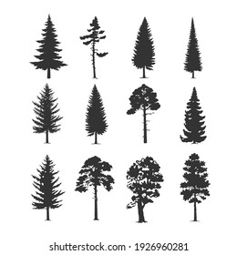 Vector trees illustrations. Monochrome illustrations with a coniferous trees.