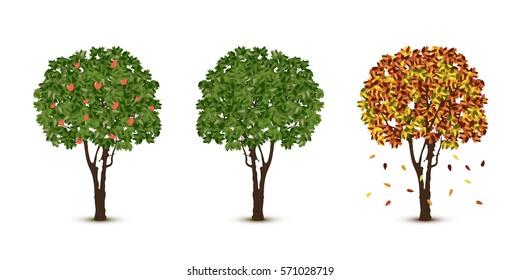 Vector trees set on white background