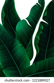 Vector Tropical Banner with Realistic Banana Tree Leaves. Minimalist Jungle Bg. Exotic Background with Palm Leaves