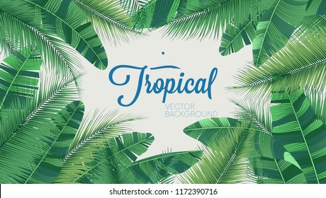 Vector tropical botanical plants, background with leaves of coconut and banana